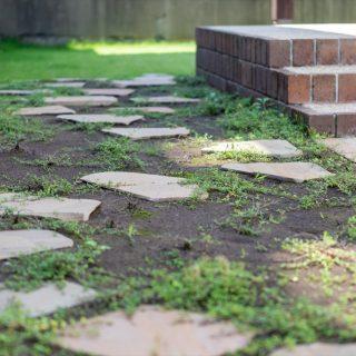 グランドカバーは成長とともに葉が地面を覆い、まるで緑の絨毯のようになります。