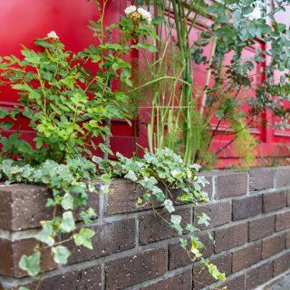 高低のある植物で立体感をつくりだしています。