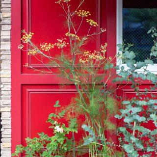 すくすく育っている草花とシンボルツリーのユーカリ。