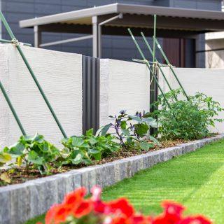 花壇ですくすく育つ、収穫が楽しみな野菜たち。