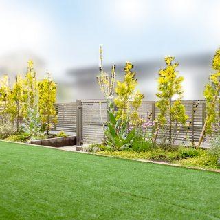 イエローグリーンの可愛いコニファーが並ぶ花壇に、子供が遊べる広々とした人工芝の空間。