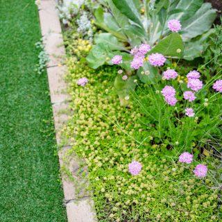 カラフルで可愛らしい花壇の草花を眺めていると癒されますね。