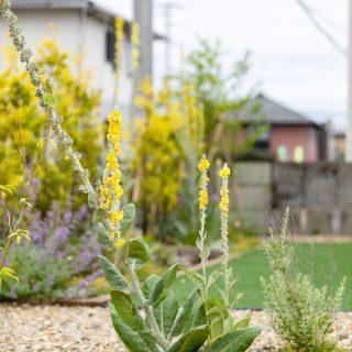 高さのある草花を使いボリュームと奥行感を出しています。