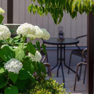 アナベルの白い花がテラスに良く似合います。